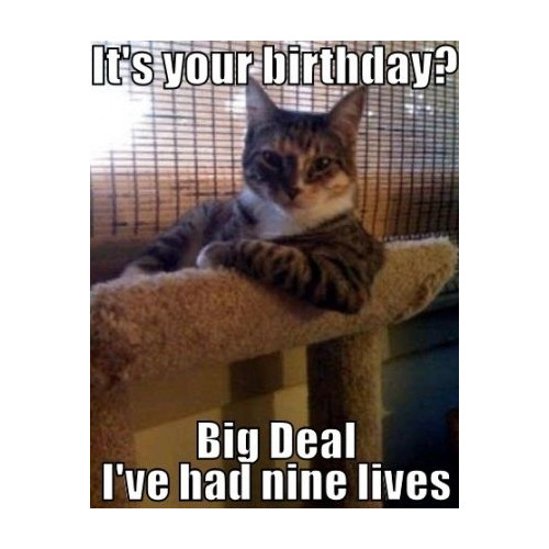It's your birthday. Big deal, I've had nine lives: