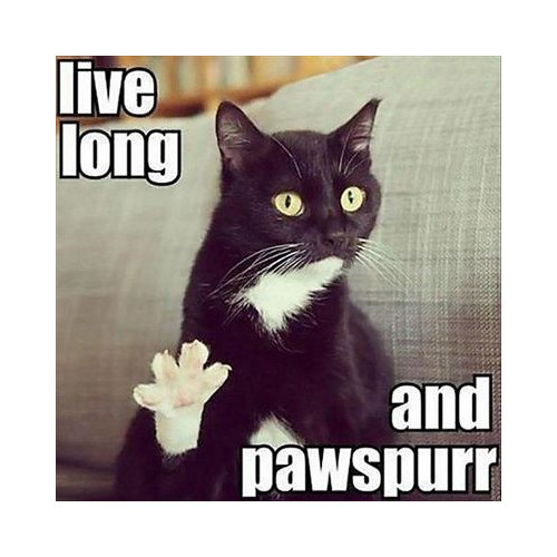Live long and pawspurr meme: