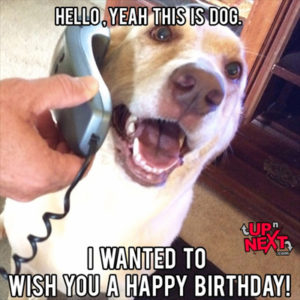 Hello yeah, this dog. Wishing you a happy birthday meme:
