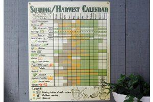 Vintage sowing and harvesting calendar