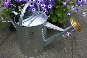 Traditional galvanised watering can